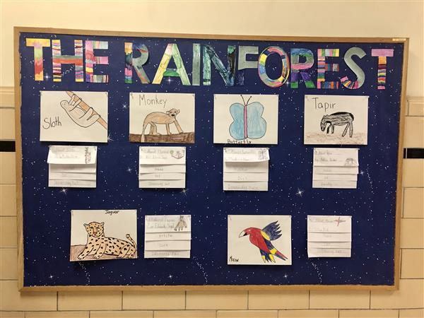Rainforest Animal Book Reports